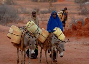 Donkeys carrying water (copyright with the Brooke)